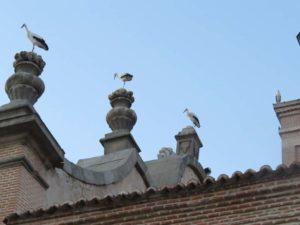 Iglesia San Pedro Ad Vincula Vallecas (12)