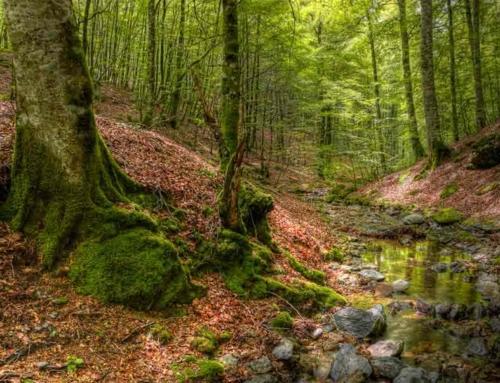 PUENTE DE LA ALMUDENA – HAYEDOS DE QUINTO REAL E IRATI EN BICI (Navarra)