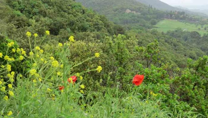 En Semana Santa descubre Toscana y sus paisajes en bicicleta