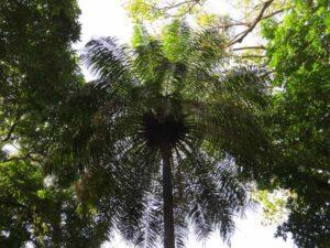 Floresta-en-las-bijago