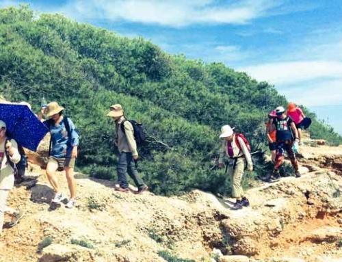 Senderismo por los olivos milenarios, Tinença de Benifasa y Costa de Irta en Castellón