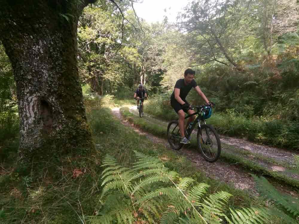 Bosques navarros en bici